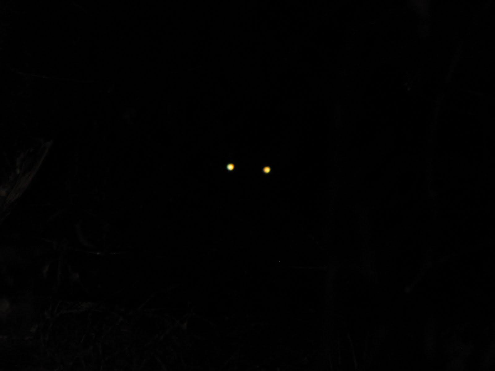 Bear eyes at night - photo#27