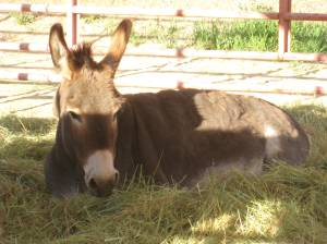 Donkey Copping Some Shade
