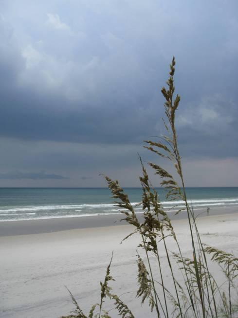 Sentinal Sea Oats