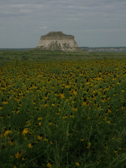 Butte and Rudbeckia